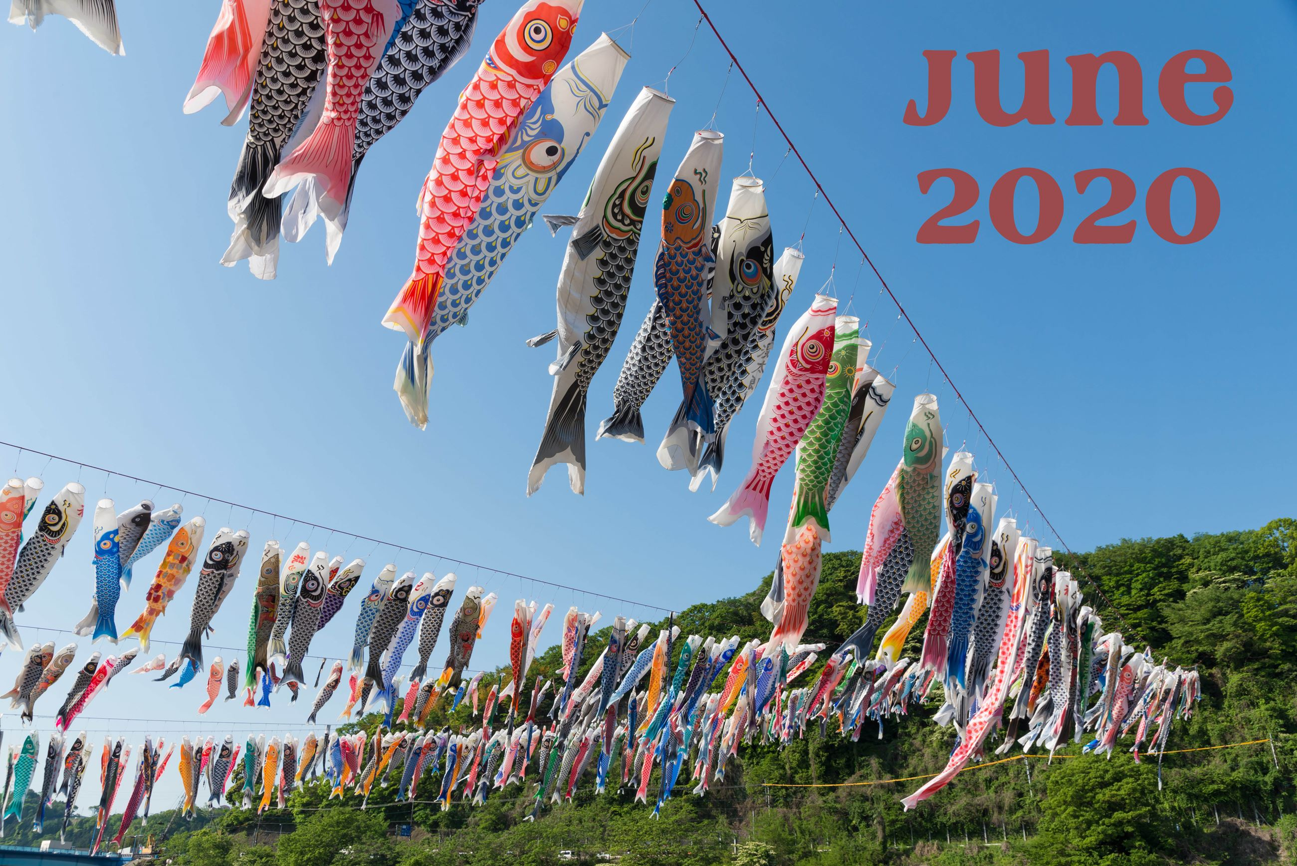 June Gazette Image Fish Flags hanging in lines