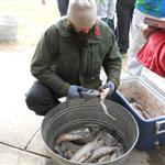 Photo of Wyoming Game and Fish staff checking burbot for internal tags during the 2013 Burbot Bash