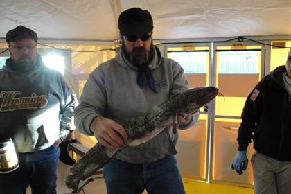 Monster Burbot caught during the 2011 Burbot Bash