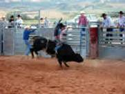 bull ridinig in 2005 Cow Country Rodeo in Manila, Utah near the Flaming Gorge